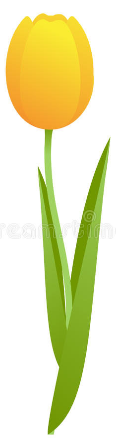 Free Yellow Tulip Royalty Free Stock Image - 12527406