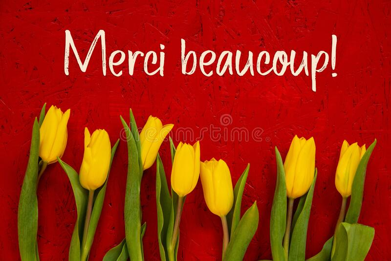Yellow Tulip Flowers, Red Background, Text Merci Means Thank You. Red Wooden Background With French Text Merci Beaucoup Means Thank You. Yellow Tulip Flowers In stock photos