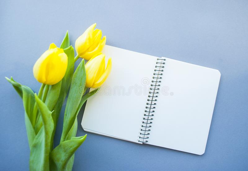 Yellow tulip on pastel background. Bouquet of beautiful yellow tulips and notebook on violet background with copyspace. Spring concept royalty free stock photography