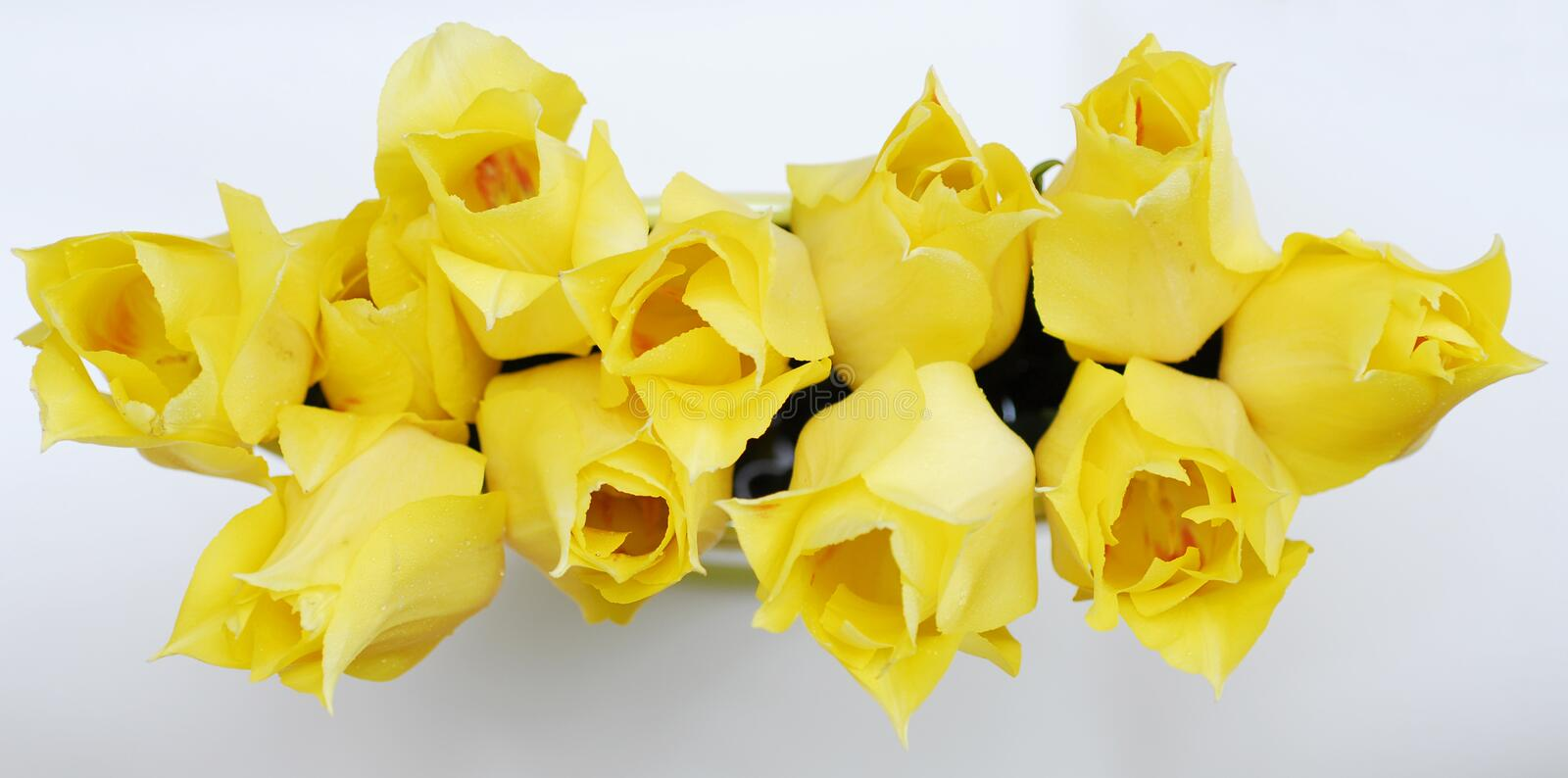 Yellow tulips 13 royalty free stock photography