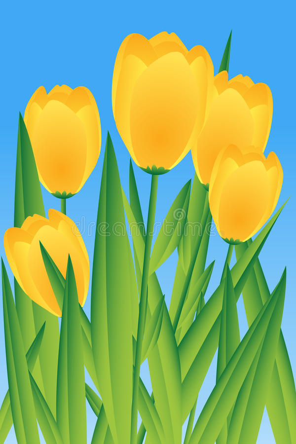 Download Yellow tulips stock vector. Image of style, plant, beautiful - 13478901