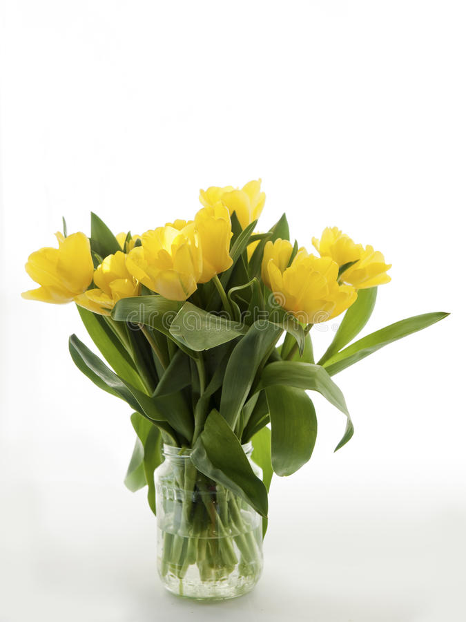 Download Yellow Tulips Bouquet On A White Background Stock Photo - Image: 24355046