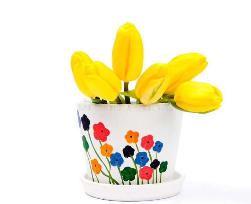Download Yellow tulips in flowerpot stock photo. Image of summer - 23988934