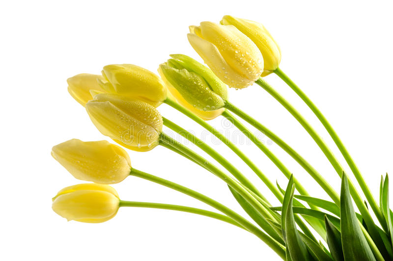 Download Yellow Tulips Flowers With Long Stalk Stock Image - Image: 37710387
