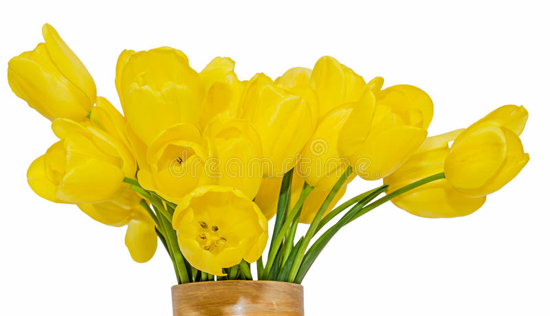 Yellow tulips flowers in a vibrant colored vase, close up, isolated, white background.  stock images