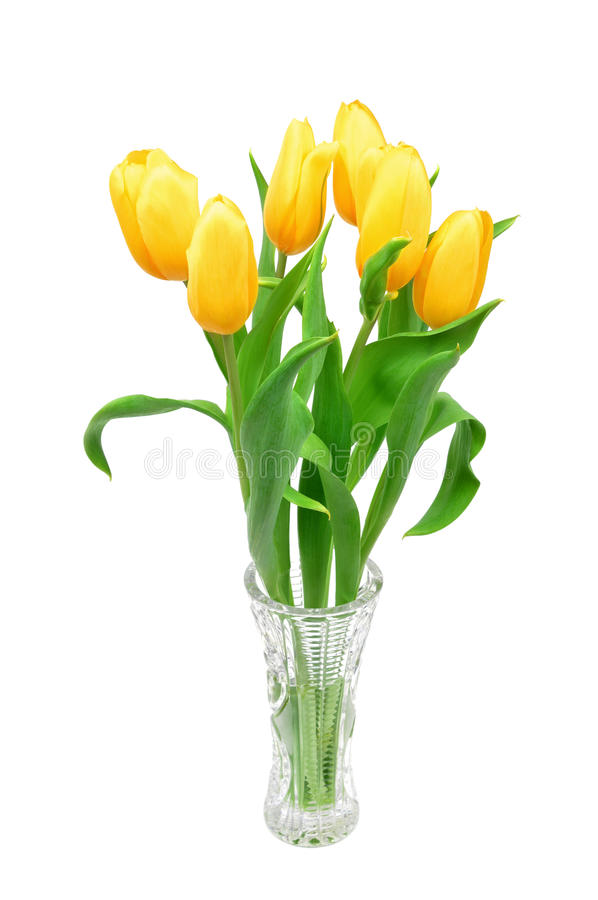 Yellow tulips in a glass vase isolated on white background, yellow spring flowers stock photography