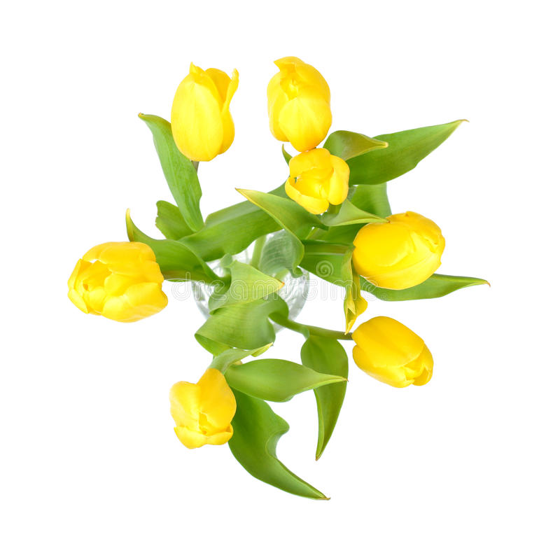 Yellow tulips in a glass vase isolated on white background, yellow spring flowers top view royalty free stock image