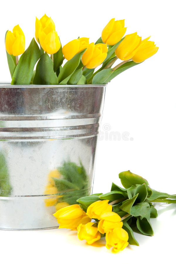 Yellow tulips in a metal pail on white. A bouquet of yellow tulips in a silver, metal pail on a white background stock image