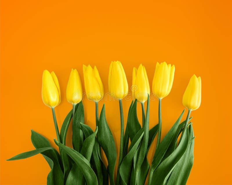 Yellow tulips on Orange background.  royalty free stock image