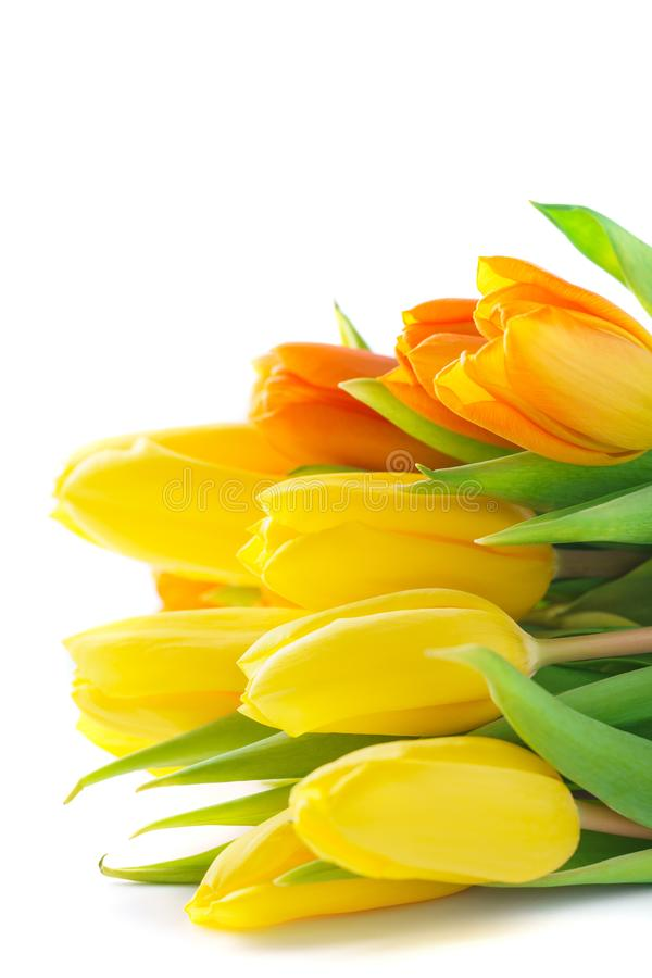 Yellow Tulips for Valentines or Mothers Day. Isolated. royalty free stock photos