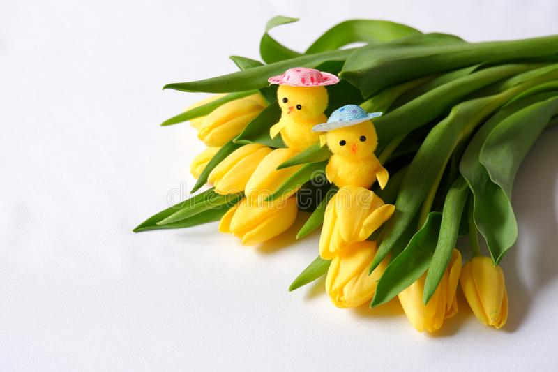 Yellow tulips white background two toy chickens heads. Yellow tulips white background two toy chickens pink blue heads green leafs eastern spring stock photos