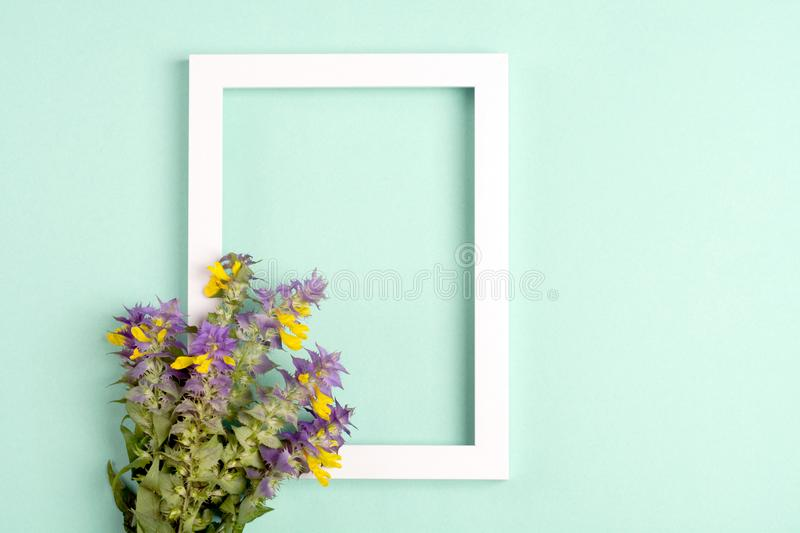 Yellow-violet flowers, photo frame on a green background. Top view, copy space. Flat lay royalty free stock photography