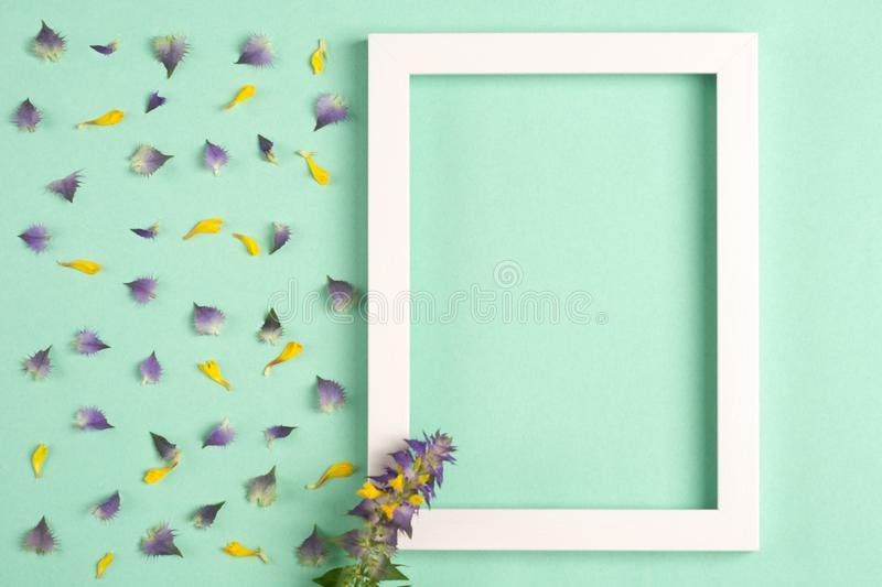 Yellow and violet petals and flowers, photo frame on a green background. Top view, copy space. Flat lay stock images