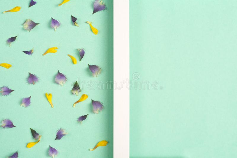Yellow and violet petals on a green background. Top view, copy space. Flat lay royalty free stock image