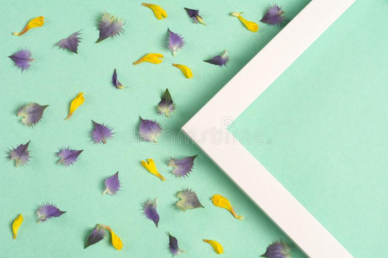 Yellow and violet petals and triangle frame on a green background. Top view, copy space. Flat lay royalty free stock photo