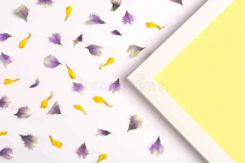 Yellow and violet petals and yellow triangle on a white background. Top view, copy space. Flat lay stock images
