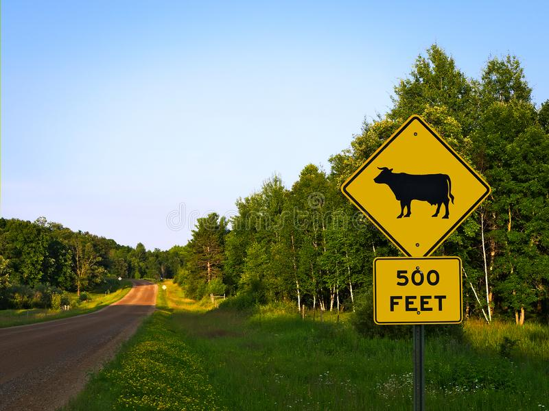 Yellow Warning Road Signs on a gravel rural country roadside. Yellow Warning Road Signs on a tree lined gravel rural country roadside at dusk - cattle crossing stock image