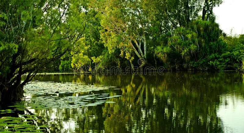 Yellow Water. Is part of the South Alligator River floodplain within the Kakadu National Park. A boardwalk provides good views of 's wildlife. When the waters royalty free stock photos