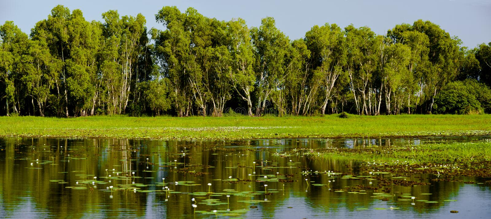 Yellow Water. Is part of the South Alligator River floodplain within the Kakadu National Park. A boardwalk provides good views of 's wildlife. When the waters stock image