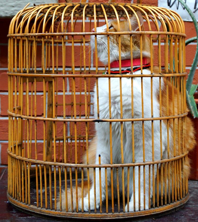 The yellow and white cat in a cage desires for freedom. The yellow and white cat in a cage feels sad. Its big and beautiful eyes are filled with sorrow. It stock photo