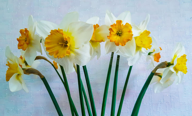 Yellow and white flowers. Daffodils. A bouquet of white and yellow flowers. Close-up. Green stems stock photos