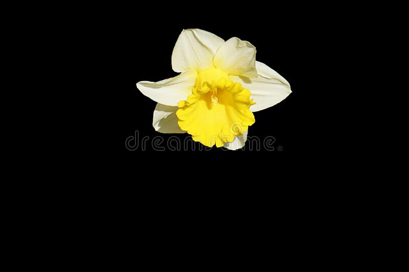 Yellow And White Petaled Flower Free Public Domain Cc0 Image
