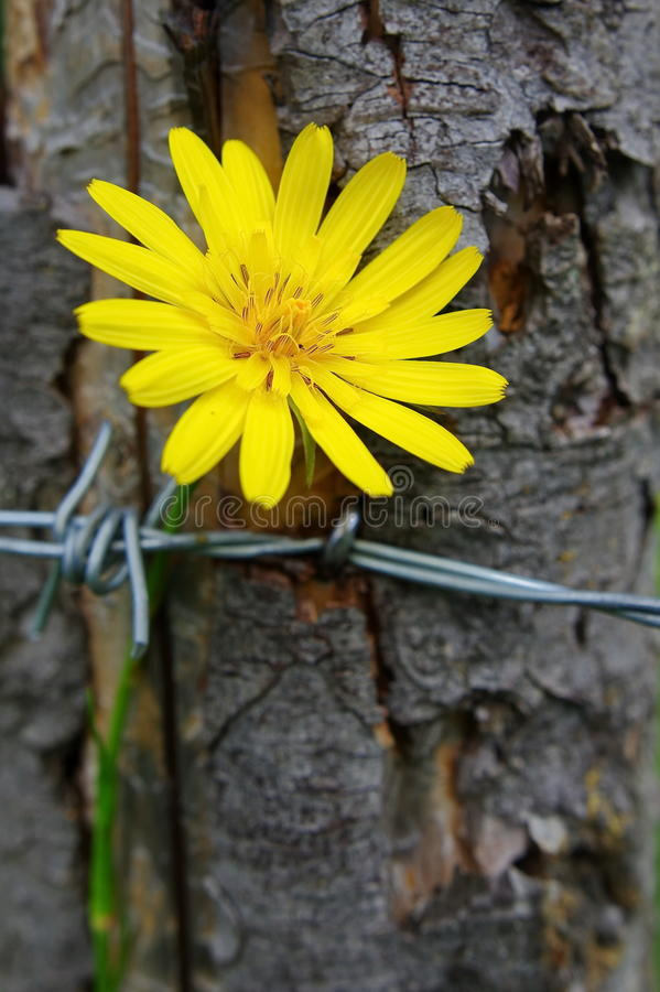 Yellow wild flower stock photography