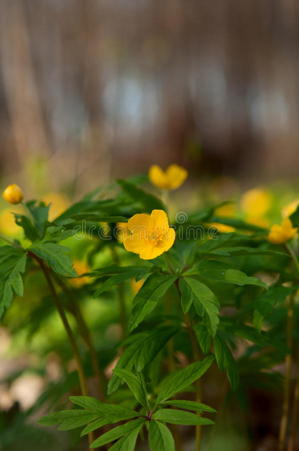 Download Yellow wild flowers stock image. Image of field, nature - 25289641