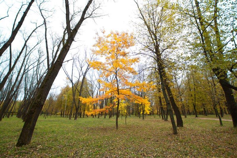 Yellow wood stock image. Image of bright, fresh, outdoors ...