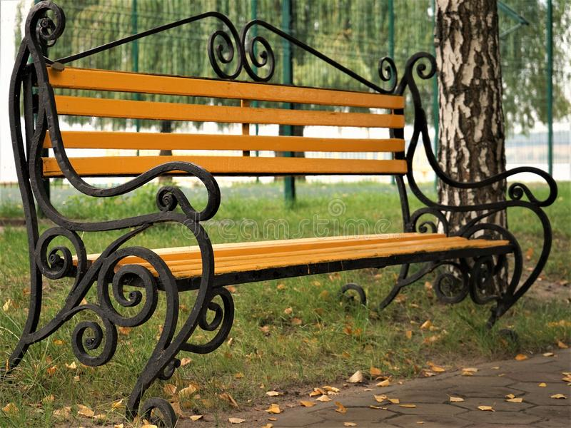 Yellow wooden bench in an autumn park among birches and willow trees stock photography