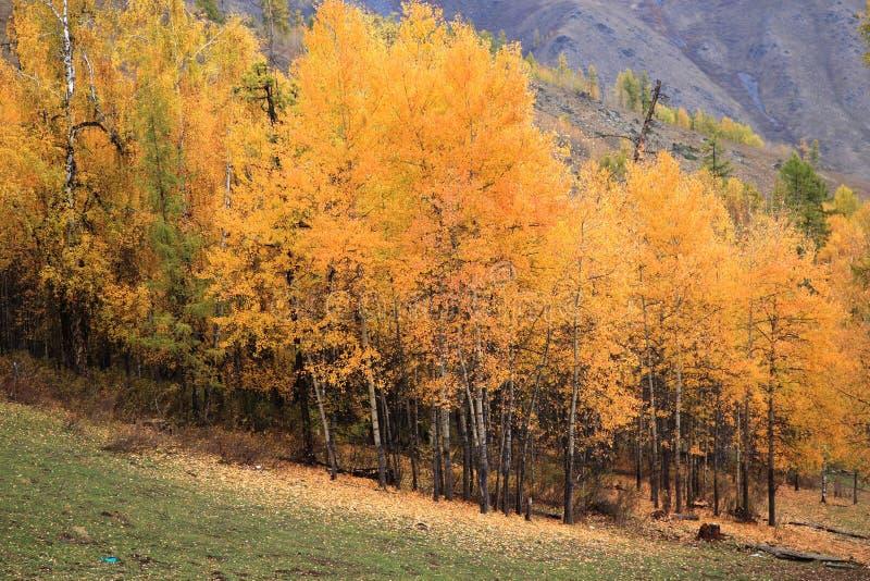 Yellow Woods stock image