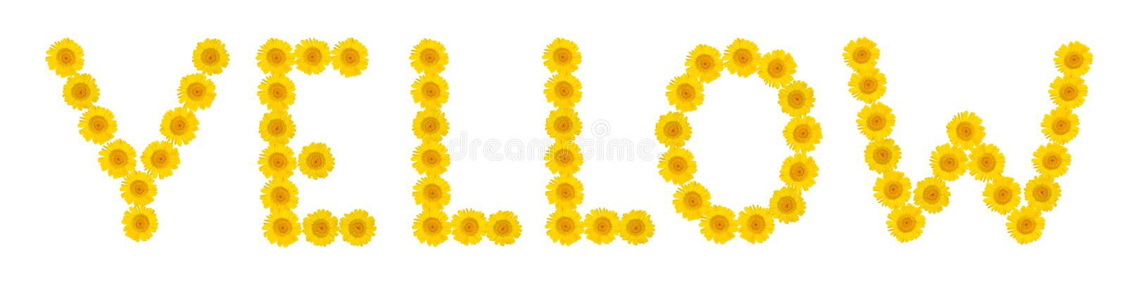 YELLOW word are made of bright, yellow flowers of chrysanthemum. Cose-up. Summer mood royalty free stock images