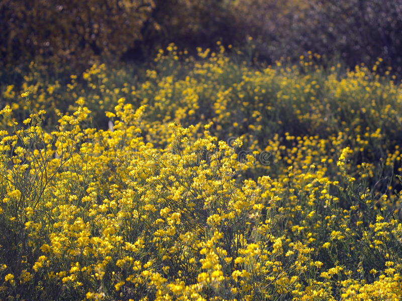 Yellow stock images