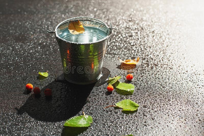 Yellowed brzoza liść unosi się na powierzchni woda w cynie zdjęcie royalty free