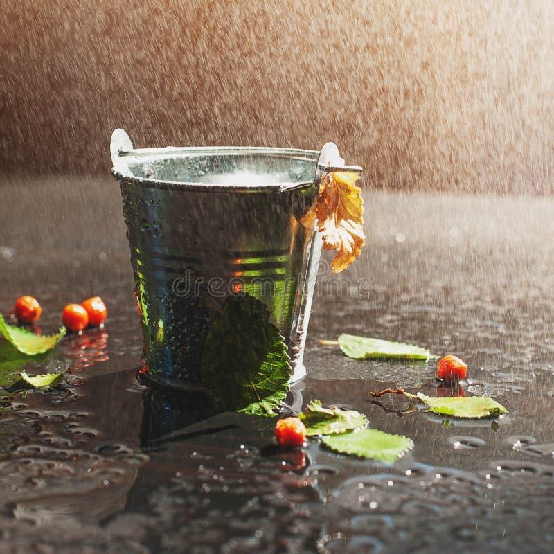 Yellowed brzoza liść unosi się na powierzchni woda w cynie obraz stock