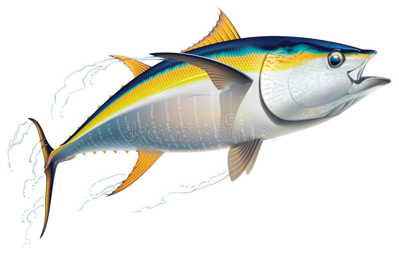Yellowfin tuna stock illustration