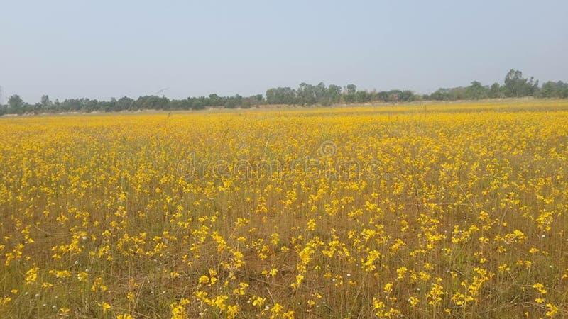 Yellowflower stockbilder
