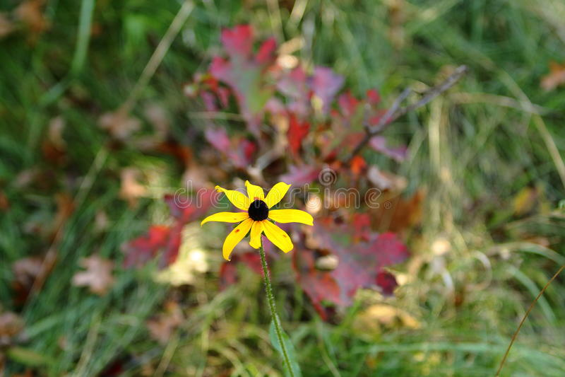 Yellowflower fotos de stock