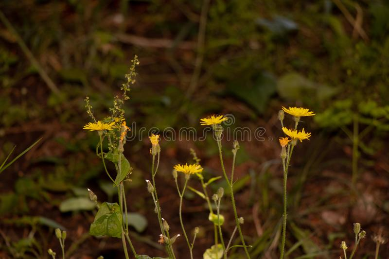 Yellowflowers photo libre de droits