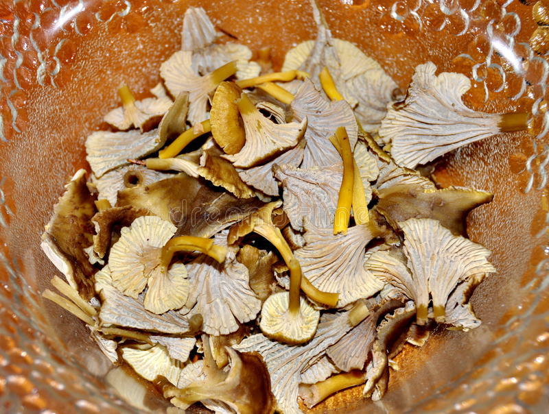 Yellowfoot chanterelles. In a glass bowl royalty free stock photos