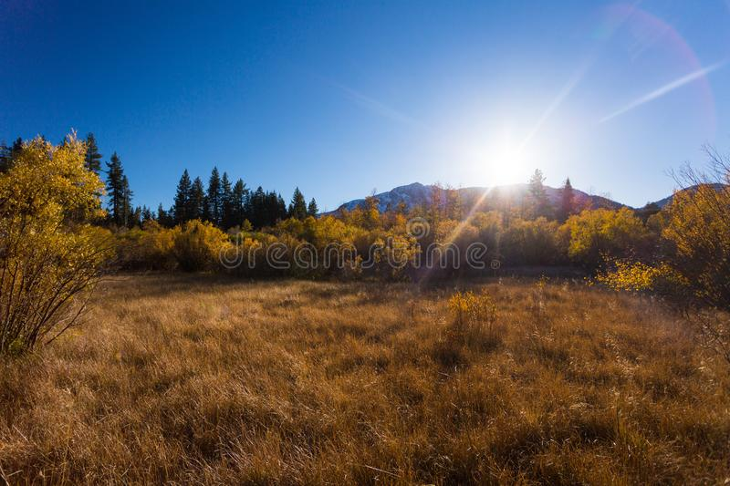 Hope Valley, California, United States. Yellowish grass, plants and trees with blue, clear sky and mountains in the background photogarphed late summer. Hope royalty free stock images
