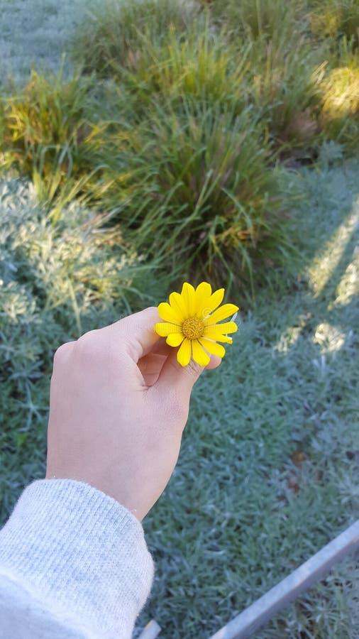 Yellowish pasja fotografia royalty free