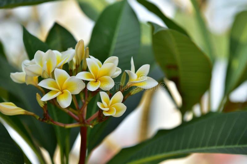 Yellowl花和树在日落 免版税库存照片