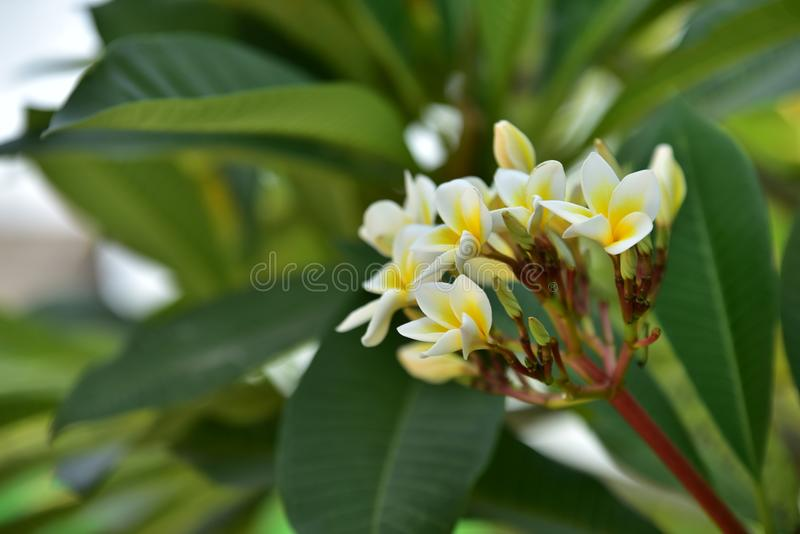 Yellowl drzewo przy zmierzchem i kwiat fotografia stock