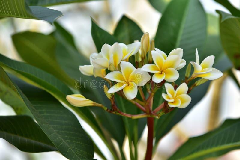Yellowl drzewo przy zmierzchem i kwiat zdjęcia stock