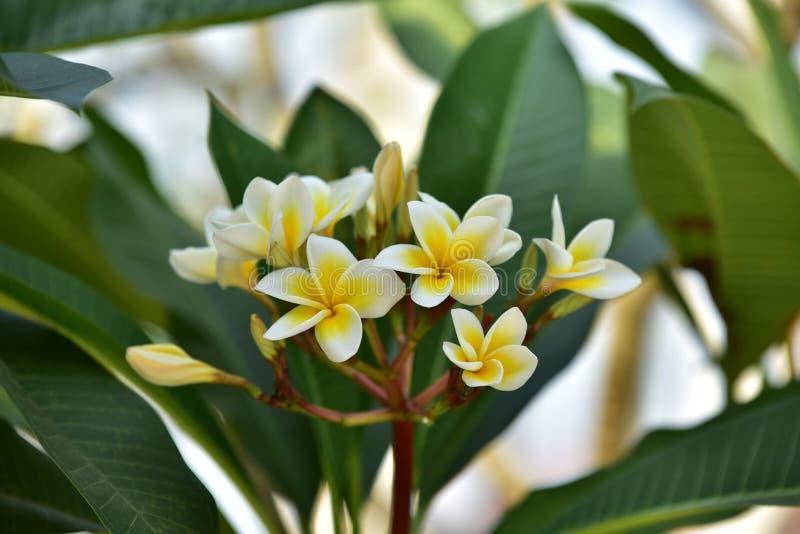 Yellowl drzewo przy zmierzchem i kwiat zdjęcie stock