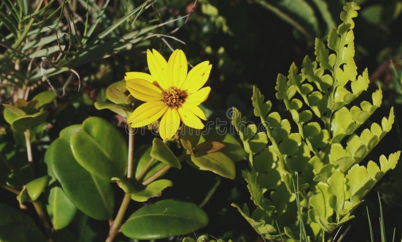 Yellowone στοκ εικόνες