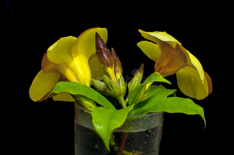 Yellows Flower on The glass stock photos