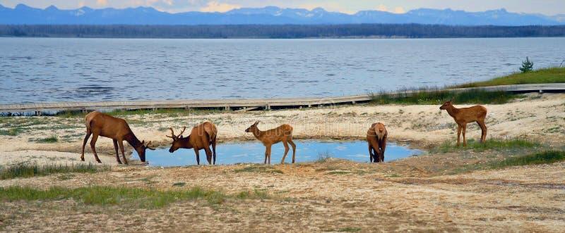 Yellowstone photos stock