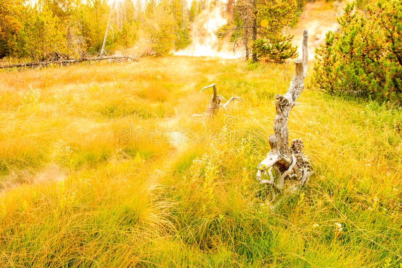 Yellowstone Autumn Scene with Geyser. This photograph is of a scene in Yellowstone National Park that I came across early one morning during a short hike.  The stock images